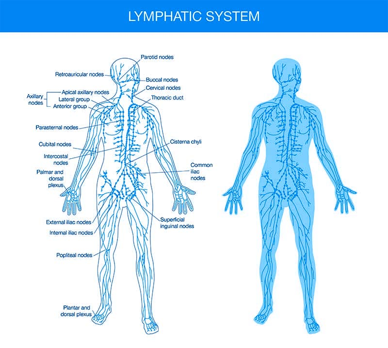lymphatic system yoga