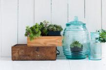 best plants for your yoga studio